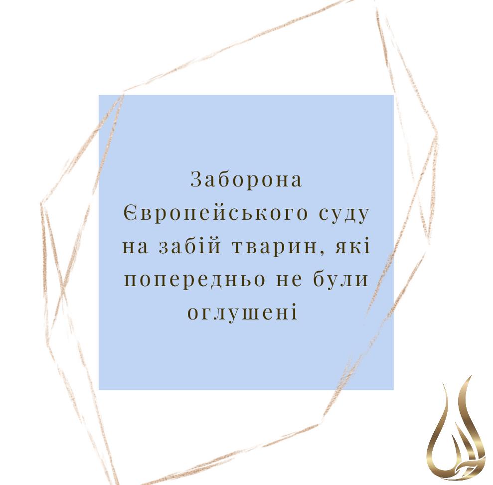 131975376_213252460262359_3586108526264460253_n