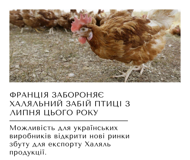 https___ukrhalal.org_ua_ (4)